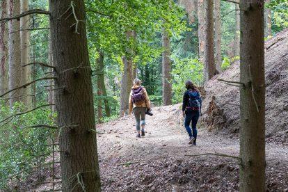 Wanderer auf einem Wanderweg im Teutoburger Wald in Tecklenburg auf dem Hexenpfad