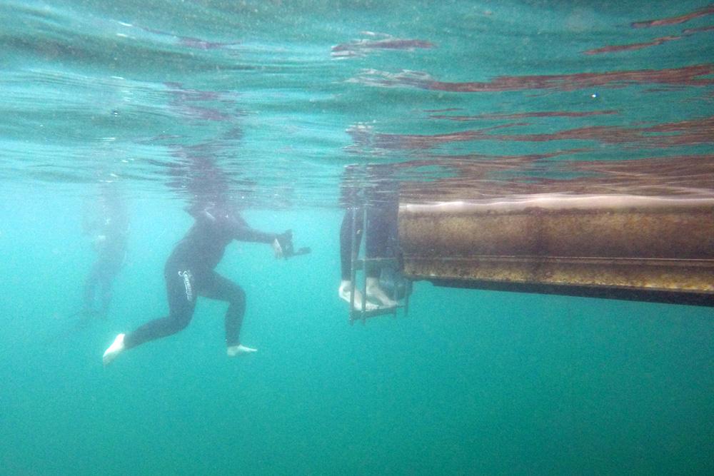 Schnorcheln und Schwimmen mit Seekühen in Florida