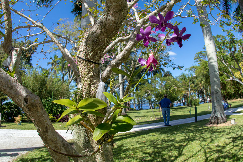 Orchideen Edison Ford Florida