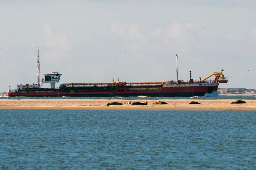 An Borkum vorbei führt eine Schifffahrtsstraße. Vom Strand aus kann man Schiffe und Seehunde beobachten.