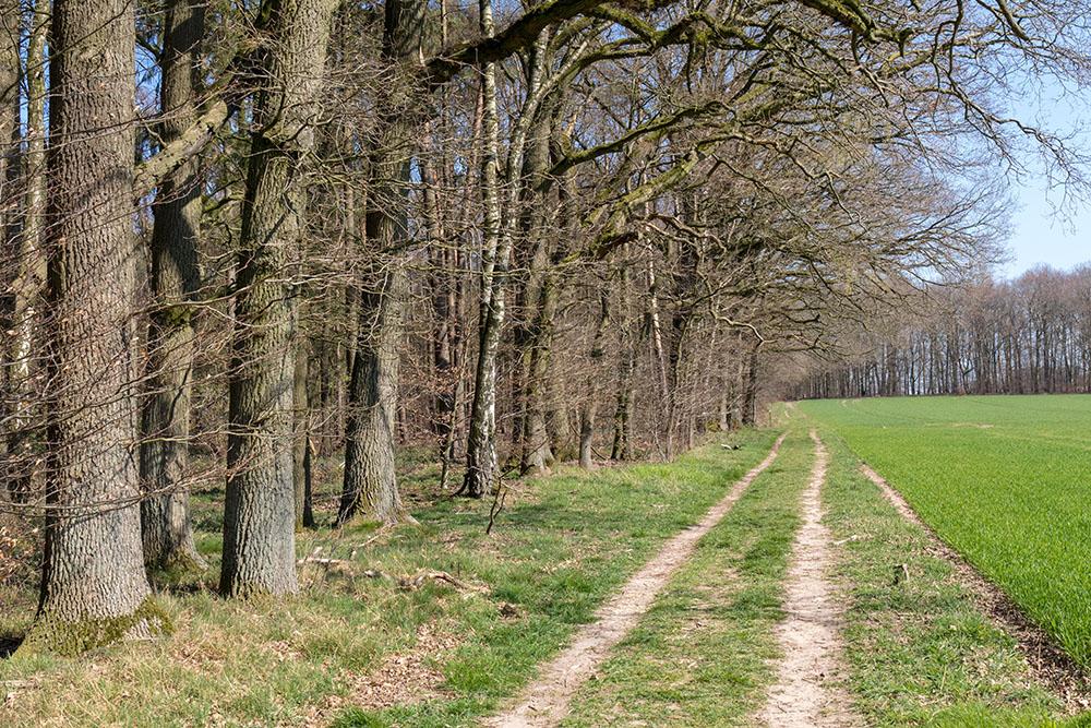 Die Sloopsteener Seenrunde ist ein Premiumwanderweg bei Osnabrück im Tecklenburger Land