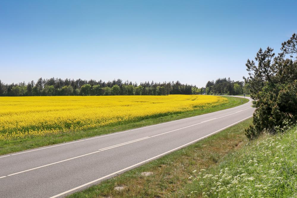 In Dänemark macht Autofahren Spaß. Auf den Straßen ist nicht viel los und es geht sehr entspannt zu.
