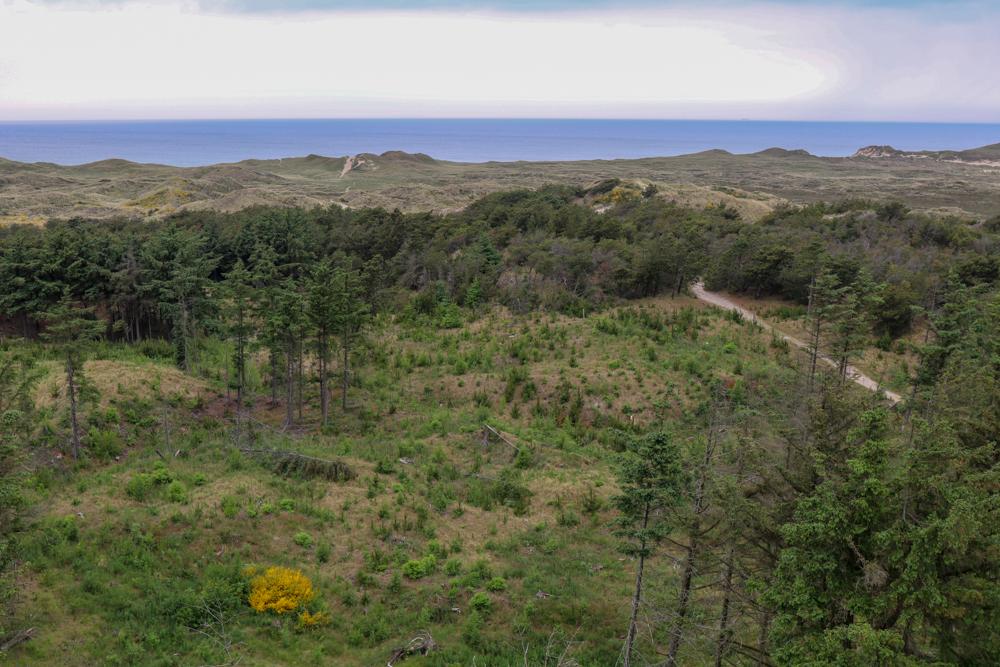 Aussicht vom Lobjerg Leuchtturm im Nationalpark Thy.