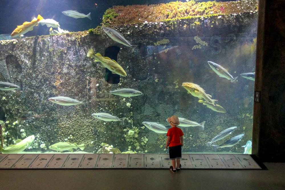 Das Oceanarium Hirtshals vermittelt in zahlreichen Aquarien auf vier Etagen ein anschauliches Bild der Nordsee.
