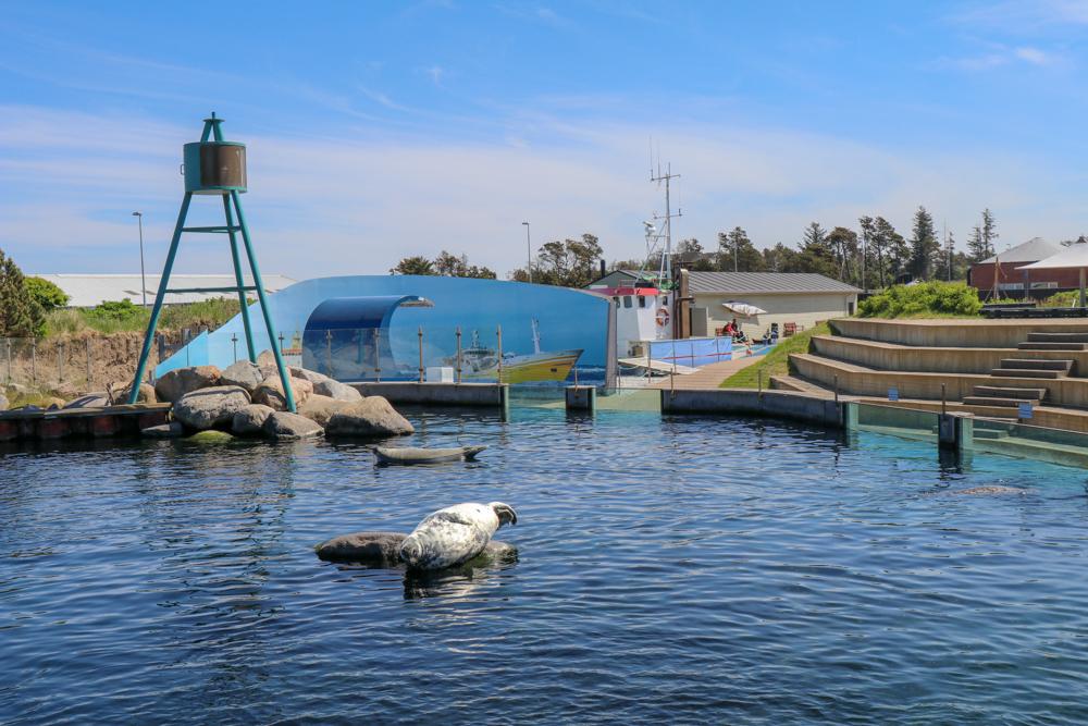 Das Oceanarium verfügt auch über einen Außenbereich in dem Kegelrobben und Seehunde leben.