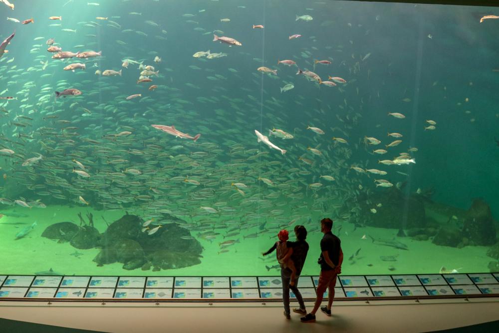 Viele der Aquarien in Hirtshals sind gigantisch.