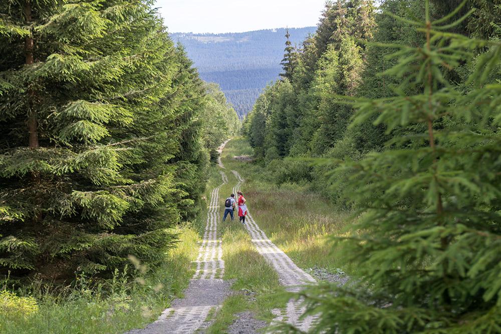 Kolonnenweg im Harz