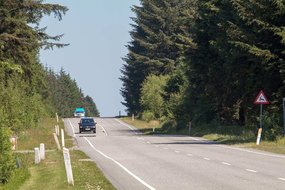 Die Straßen führen an der Jammerbucht oft durch dichte Wälder, die stark an Kanada erinnern