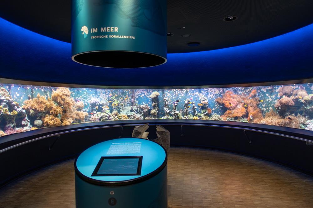 Aquarium im Aquazoo Löbbecke Museum Düsseldorf