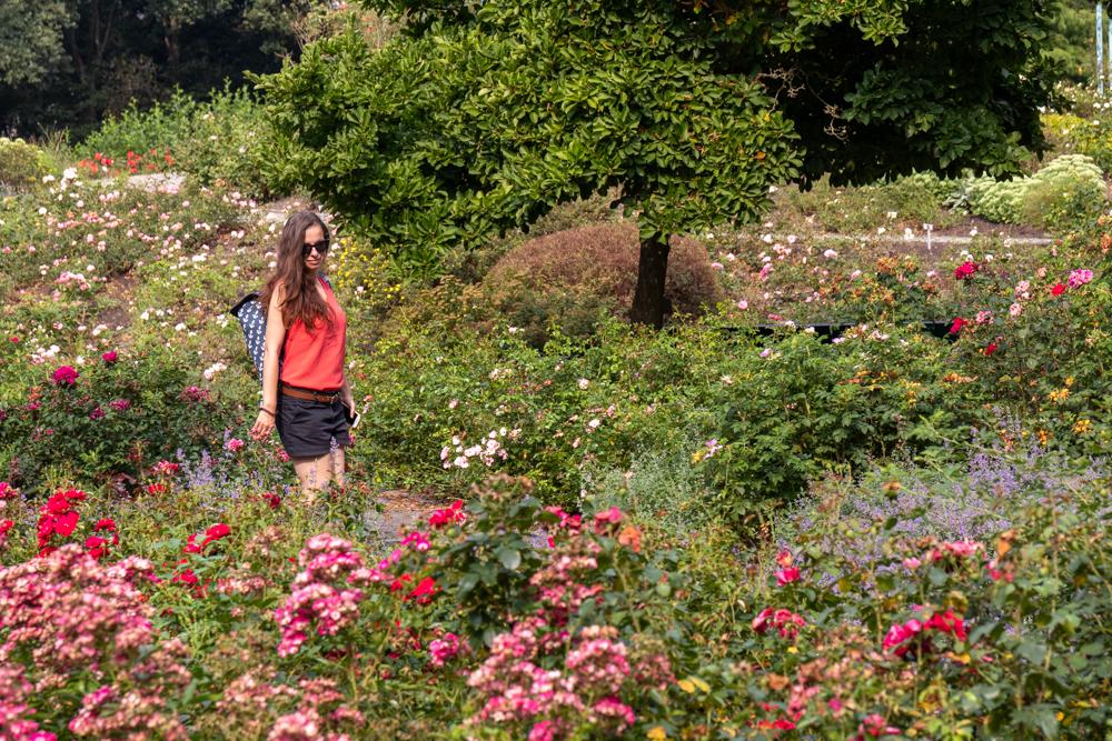 Rosengarten im Rhododendronpark Bremen