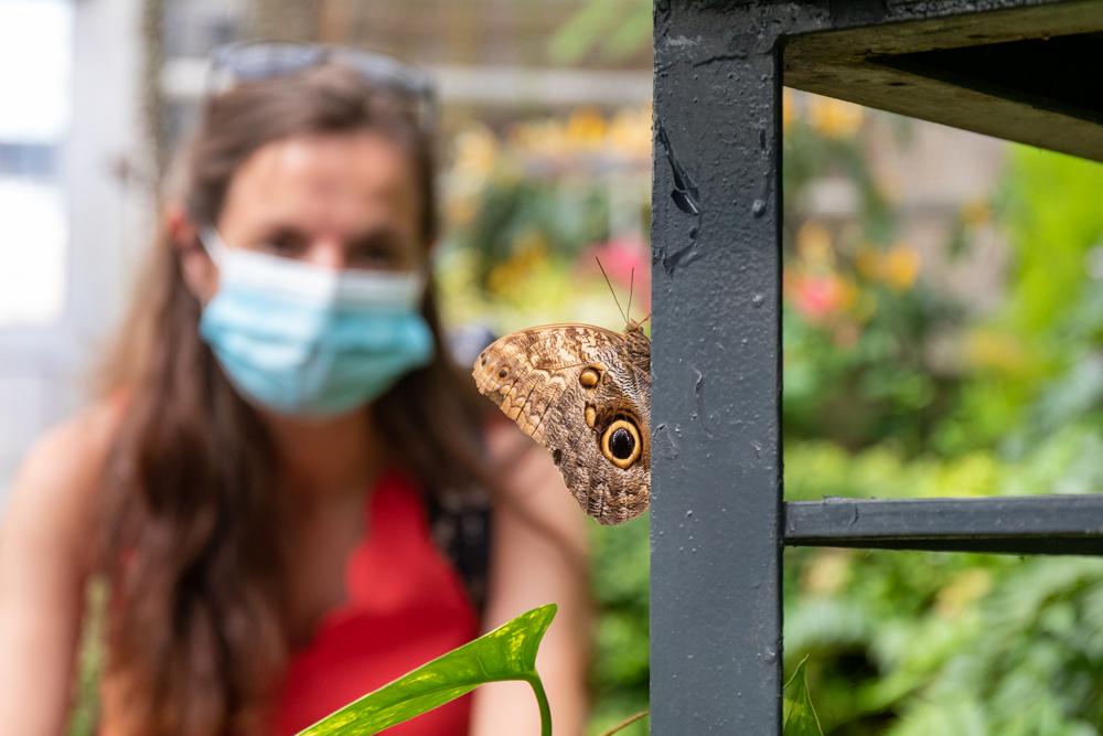 Schmetterling Botanika Bremen und Corona