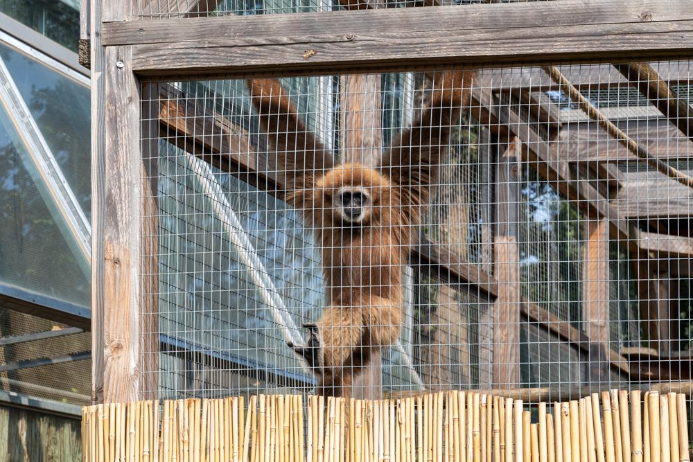 Affe in der Botanika Bremen
