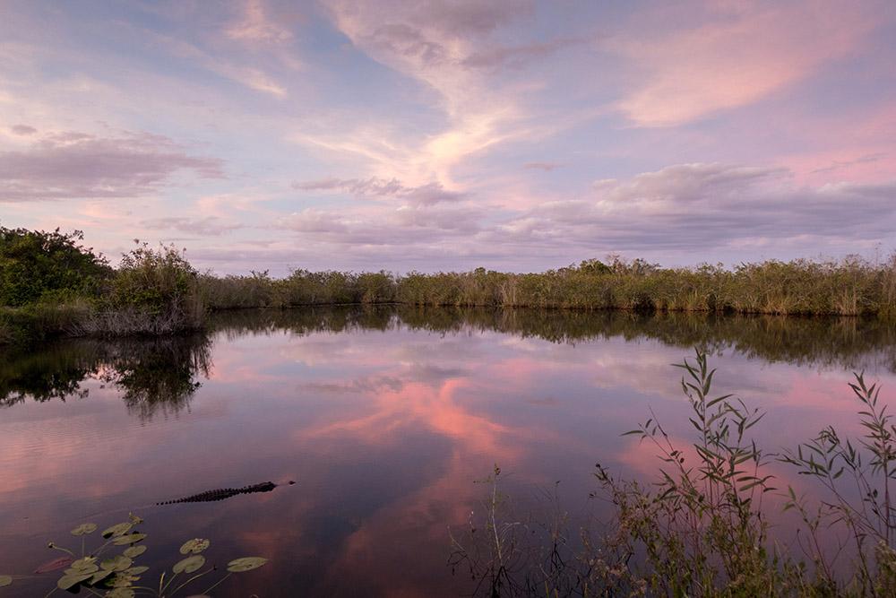 Wilde Tiere fotografieren. Ein Alligator im Everglades Nationalpark zum Sonnenuntergang