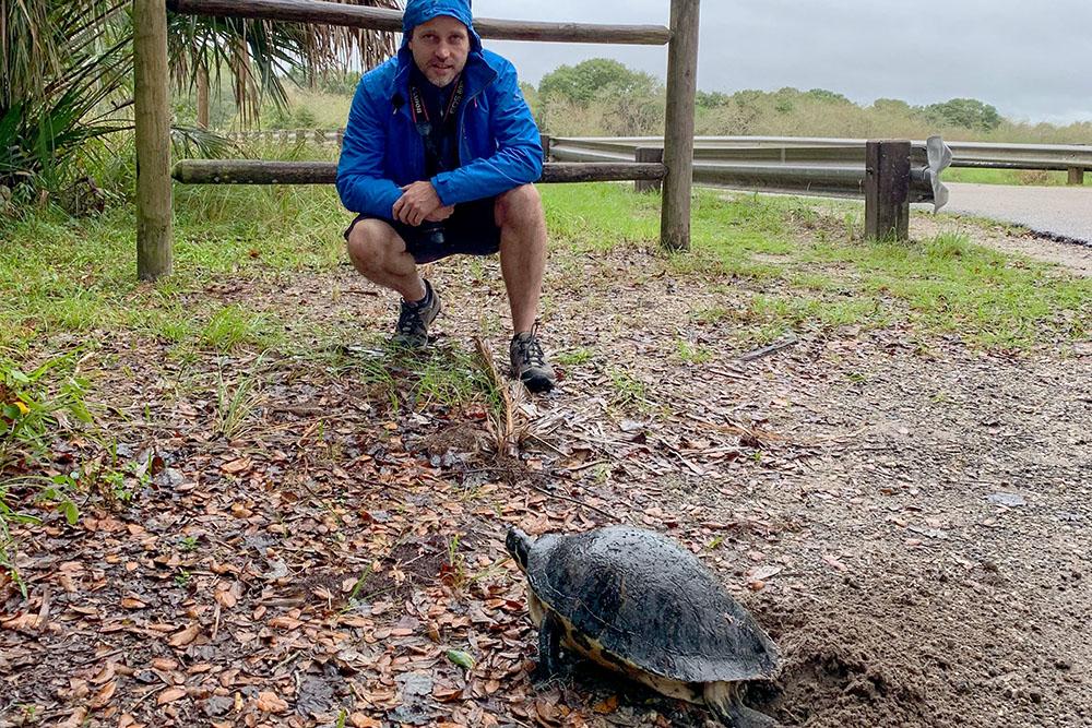 Schildkröte beobachten im Myakka River State Park Florida