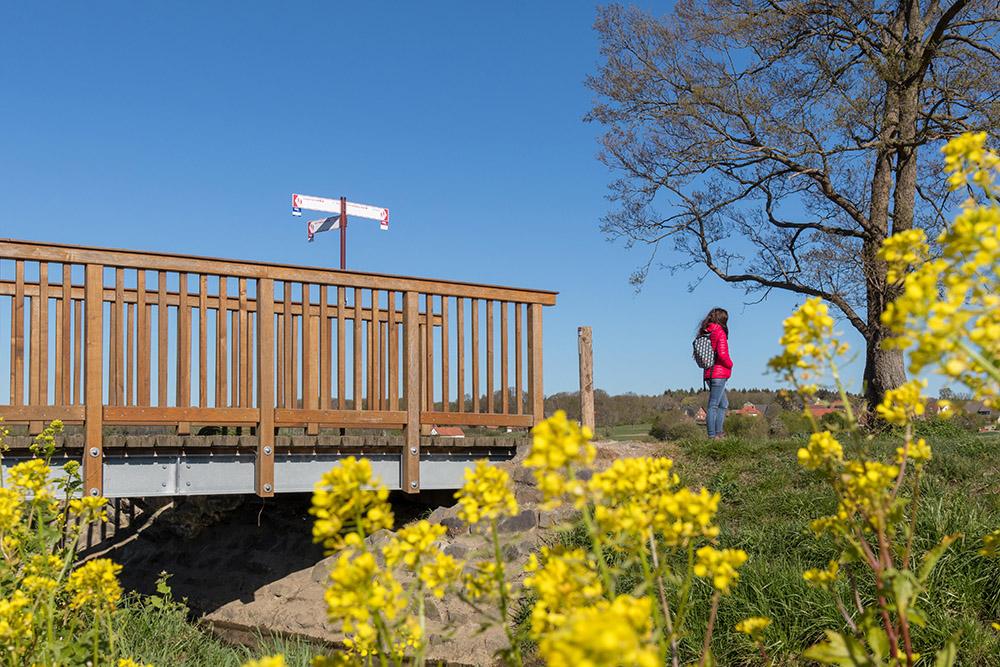 Terra Track Wandern im Osnabrücker Land mit Rapsblüte