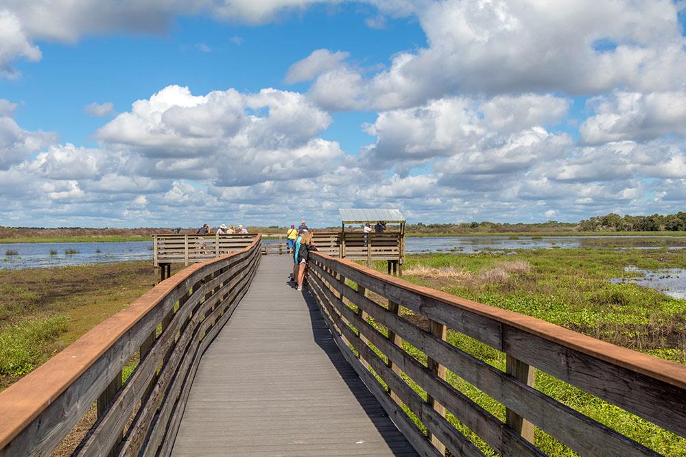 Bird Walk im Myakka River State Park Florida