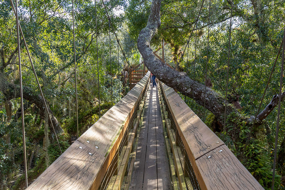 Baumwipfelpfad im Myakka River State Park Florida