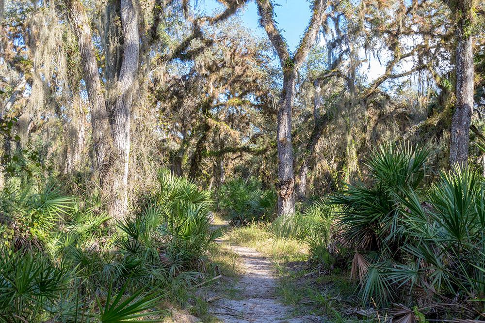 Wandern im Myakka River State Park Florida