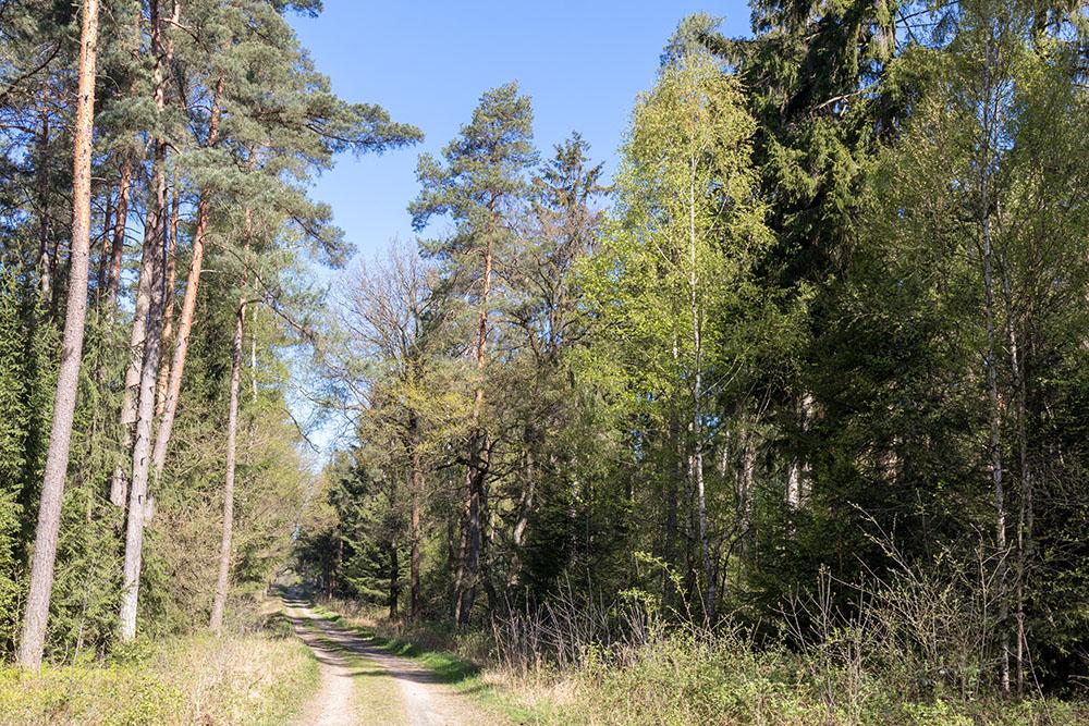 Terra Track Wandern durch den Wald im Osnabrücker Land